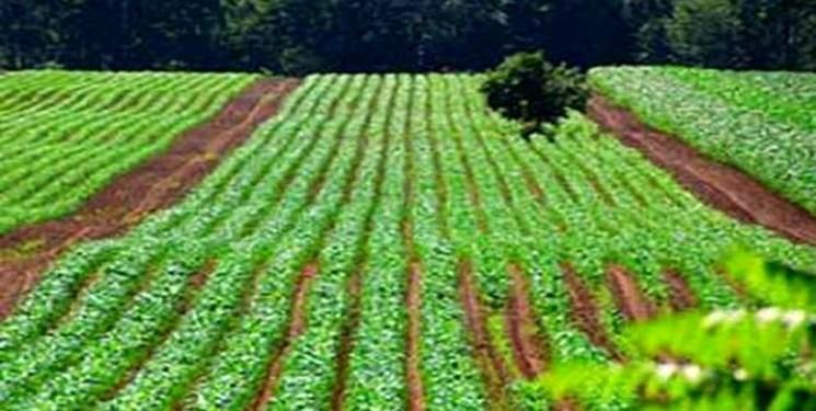 کشاورزی ارگانیک انتشار گازهای گلخانه ای را افزایش می دهد