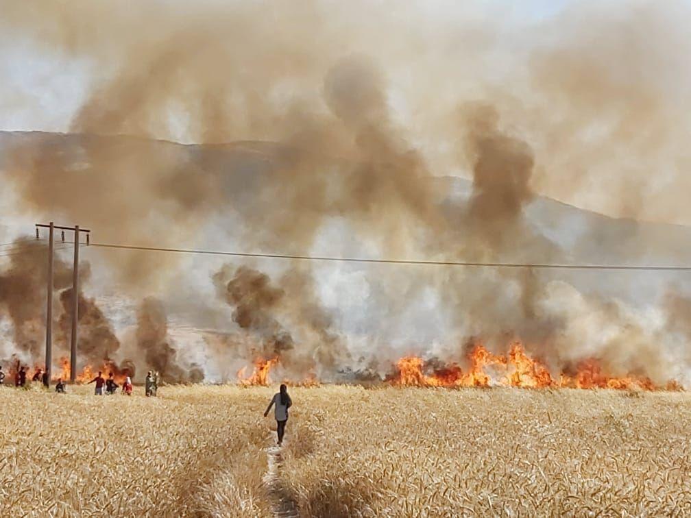 خبرنگاران خطای انسانی، 160 هکتار از محصول جو و گندم کازرون را طعمه حریق کرد