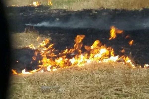 عامل آتش سوزی عمدی میانکاله در مازندران شناسایی شد