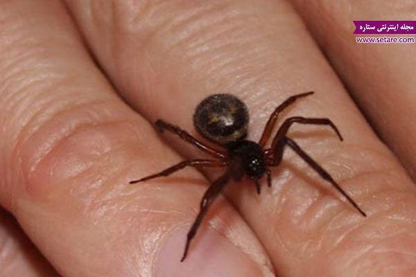 درمان خانگی نیش عنکبوت در شرایط اضطراری