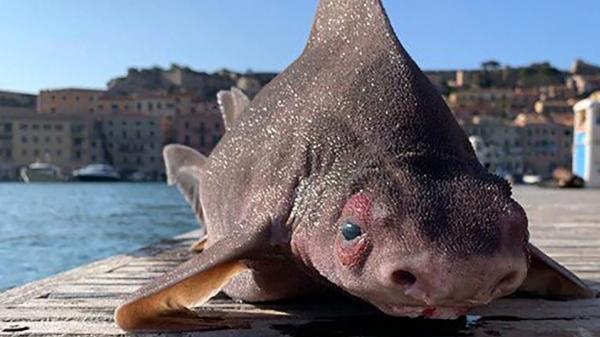 صید عجیب ترین ماهی دنیا